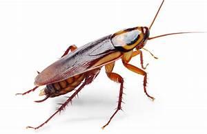 Cockroach Clip Art - Cliparts.co