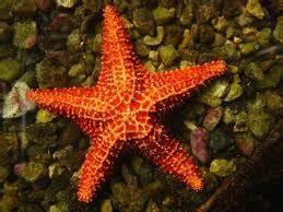 clasificacion de los animales acuaticos según su especie