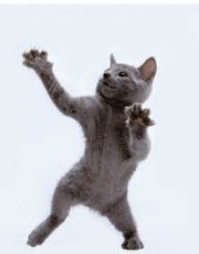 Animated Dancing Cat
