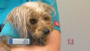 Injured Dog Found In Dumpster Is Recovering - YouTube