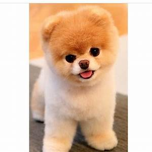 Ich Suche Einen Großen Hund : wo kann man sich so einen hund kaufen tierheim z chter ~ Jslefanu.com Haus und Dekorationen