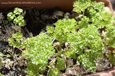 8 herbes aromatique 224 cultiver en pot recette vegan cl 233 mentine la mandarine