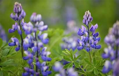 Petals Lavender Leaves Telegram вконтакте