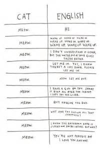 cat translator cat translation guide felinity