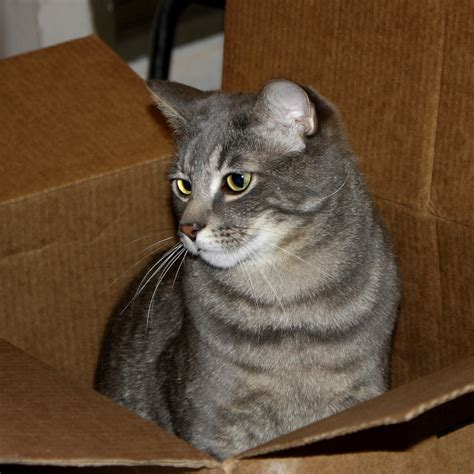 Tabby Cat Breed - Cat Lover   Cat Training