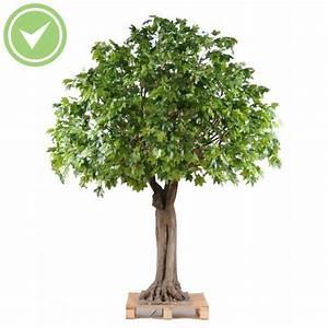 Plante D Intérieur Pas Cher : cherche arbuste design au jardin forum de jardinage ~ Premium-room.com Idées de Décoration