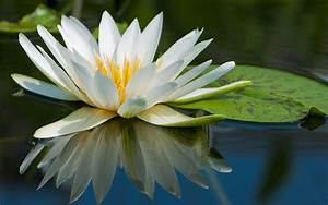 Lily Pad Wallpapers - Wallpaper Cave