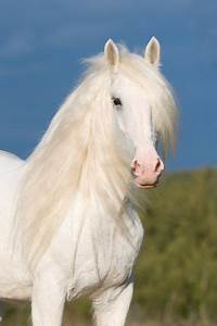 17 Best images about Horses I love on Pinterest | White ...