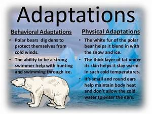 Chapter 3: Adaptations – Mr. Zimmerman's Class