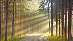 Sunshine in the woods wallpaper #27275