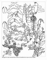 Forest Coloring Pages Print Tree Jungle sketch template