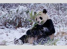 Tiere im Winter WWF Deutschland