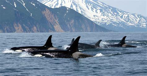 orca pebble beach systems