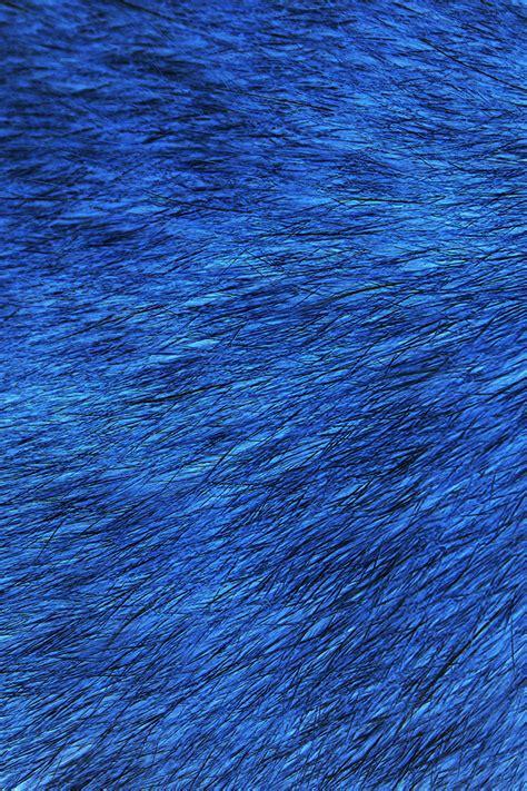 blue fur wallpaper gallery