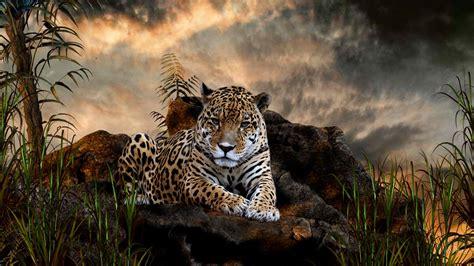 Hd Animal Wallpapers For Desktop - jaguar animal cool wallpaper hd desktop wallpaper
