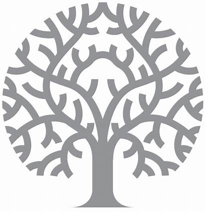 Tree Transparent History Clipart Genealogy Research Davies