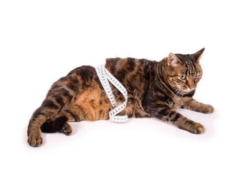 futter fuer uebergewichtige katzen