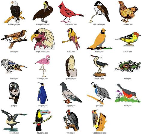 Types Of Birds We Need Fun