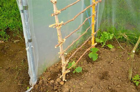 cuisiner des poivrons culture le topic du jardinage page 22
