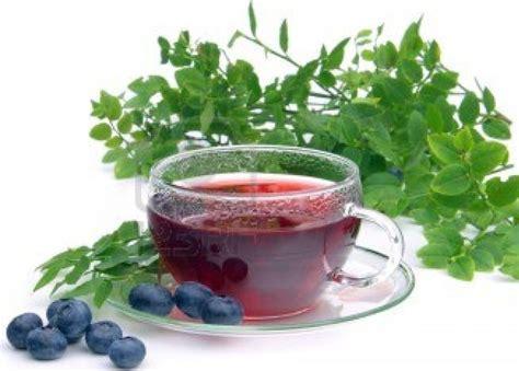 chinook blueberry tea native american recipe food