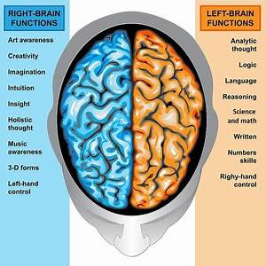 Left and Right Hemispheres - The Brain Made Simple