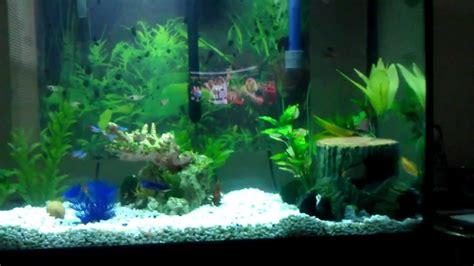 40 gallon community aquarium