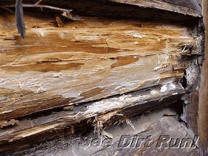 Wood Rot Log Interior Cedar Deck Rotting