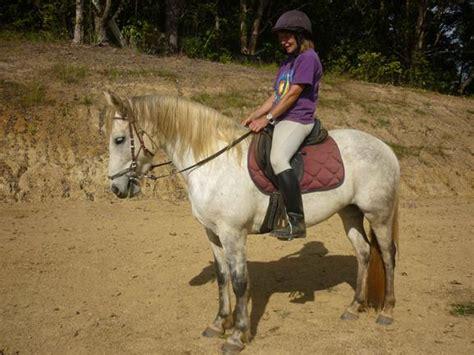 andalusian cross thoroughbred mare horse horses spanish lusitano lipizzaner horsezone