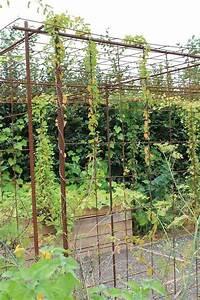 Treillage Plante Grimpante : s 39 am nager un espace pour plantes grimpantes avec du fer b ton et treillis soud pergola ~ Dode.kayakingforconservation.com Idées de Décoration