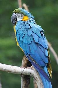 Blue and yellow macaw parrot by EmoShunka on deviantART