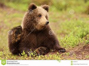 Cute little brown bear cub stock image. Image of green ...