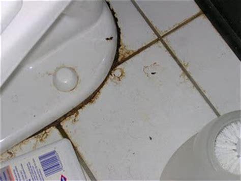leak   base  toilet