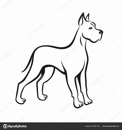 Dog Line Drawing Dane Chinese Pet Hazard