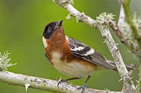 migratory bird season houston arboretum