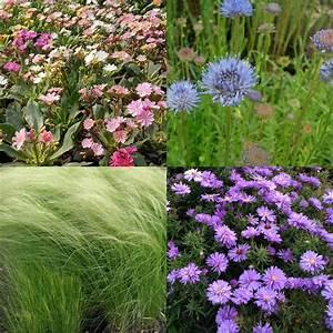 Pflanzen Für Trockenmauer : gro er 74er stauden pflanzen mix f r steingarten bodendecker ebay ~ Orissabook.com Haus und Dekorationen