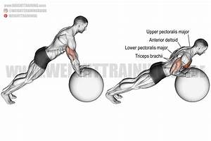 Stability Ball Push