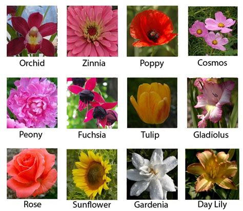 popular flowers most popular flowers outdoor projects pinterest