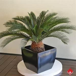 Plante De Salon : 0 salon vert plantes ~ Teatrodelosmanantiales.com Idées de Décoration