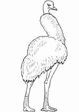 Coloring Emu Birds Bird Printable Largest Second Living sketch template