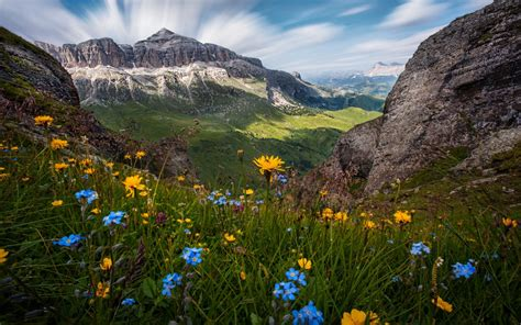 flowers   dolomites italy nature landscape wallpaper