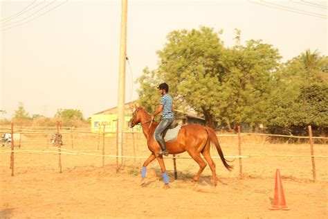 riding horse hyderabad academy