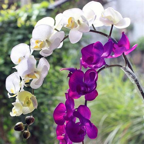 one orchid online get cheap orchid wedding bouquet aliexpress com alibaba group