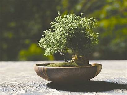 Bonsai Tree 4k Background