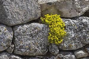 Natursteinmauer Selber Bauen : natursteinmauer bepflanzen darauf sollten sie achten ~ Michelbontemps.com Haus und Dekorationen