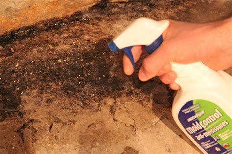 kill mold  experts advice   mold