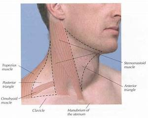 Neck Anatomy Lymph Nodes