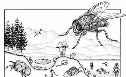 Species Scape Medium Biomass Zoology Catalogue Crabgrass