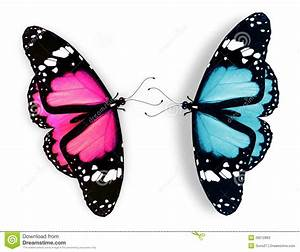 Pink And Blue Butterfly On White Stock Photos - Image ...