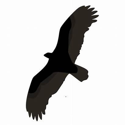 Burung Terbang Gambar Sketsa Svg Kecil Cathartes