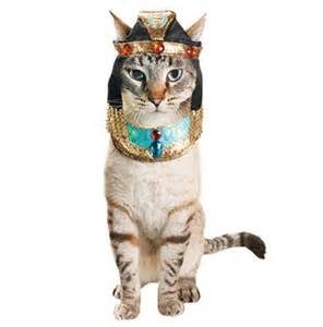 cat costumes pet win a bag of petco cat costumes for your cat cattipper